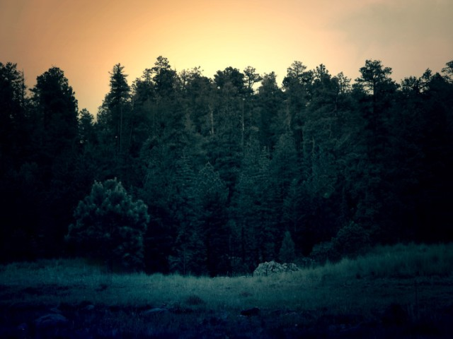 dark-dawn-forest-489-733x550