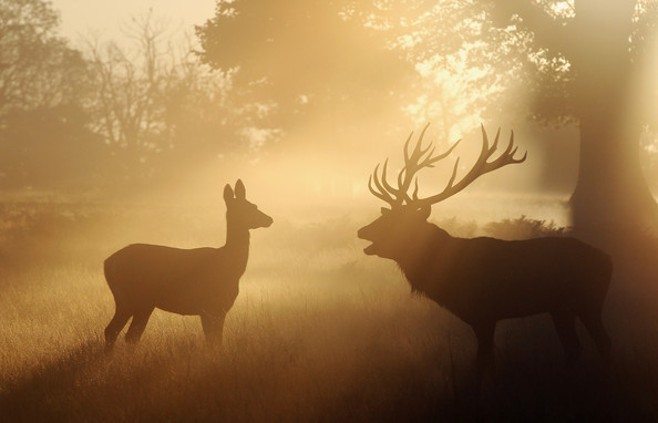 Autumn+Deer+Rut+London+Richmond+Park+FbjBM6SDkwel