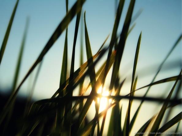 sun-shining-through-the-grass