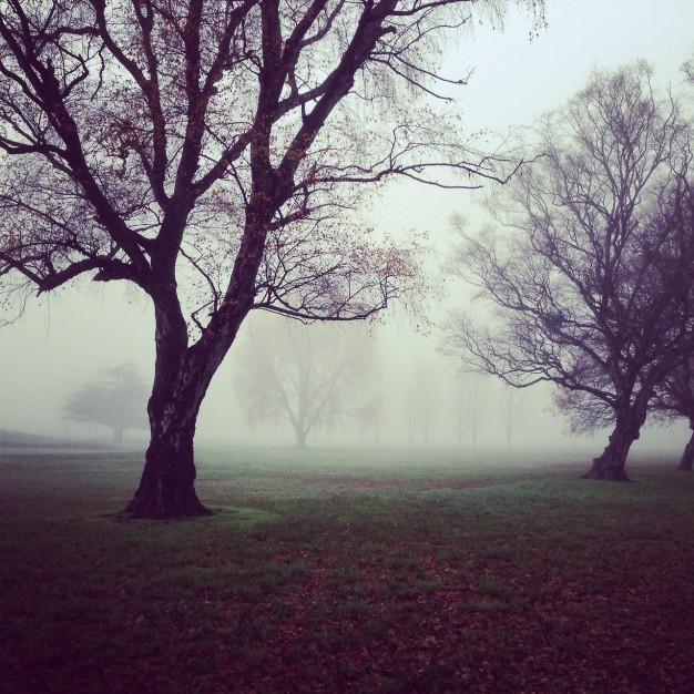 gloomy-trees_442-19317044